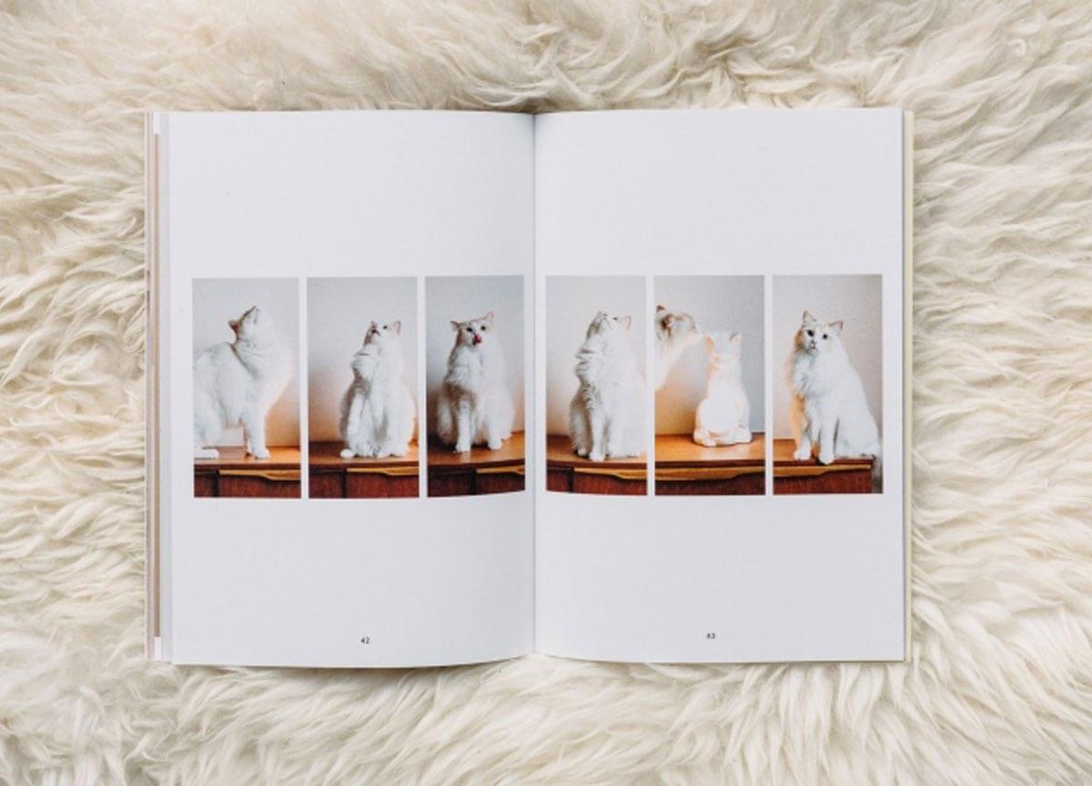 pet-people-magazine-cat