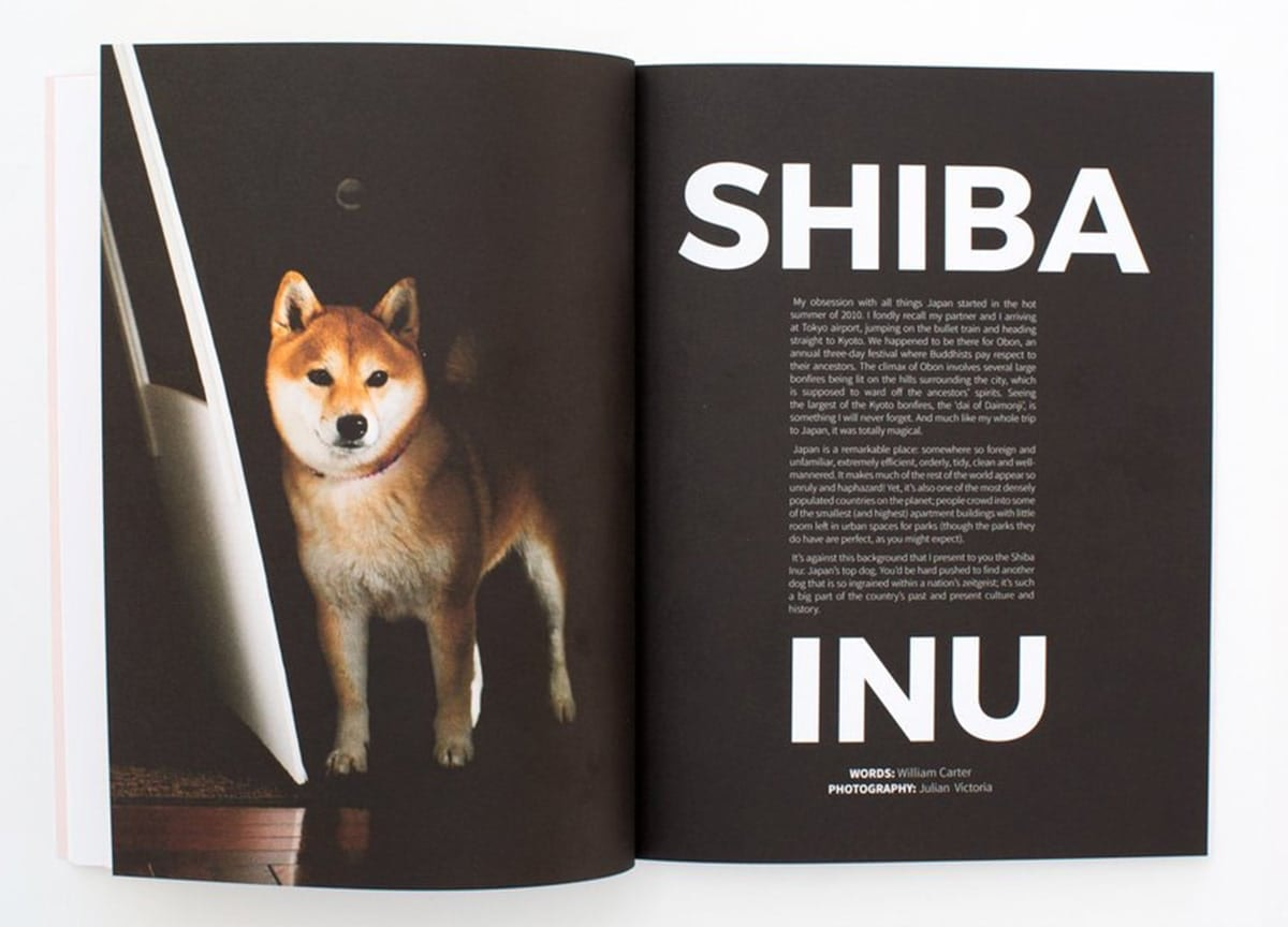 read-dog-magazine-shiba-inu-2