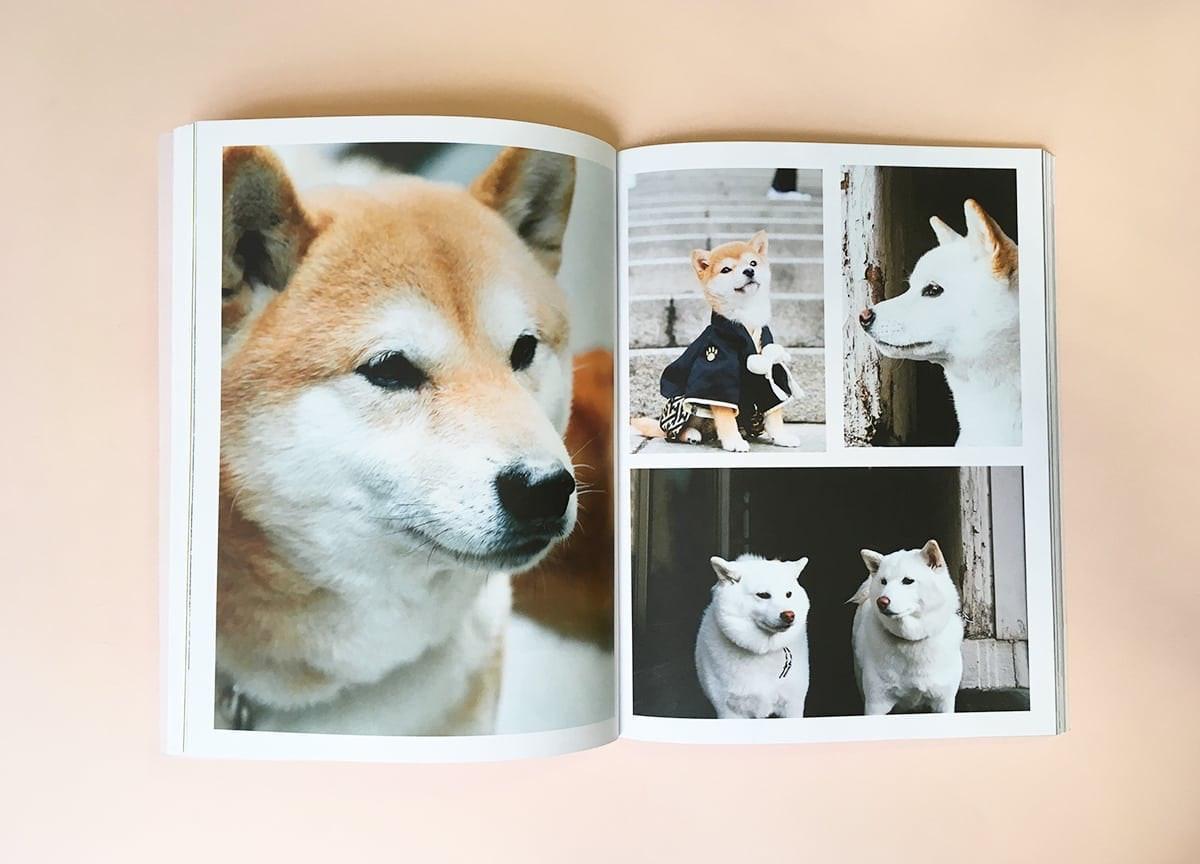 read-dog-magazine-shiba-inu-tokyo