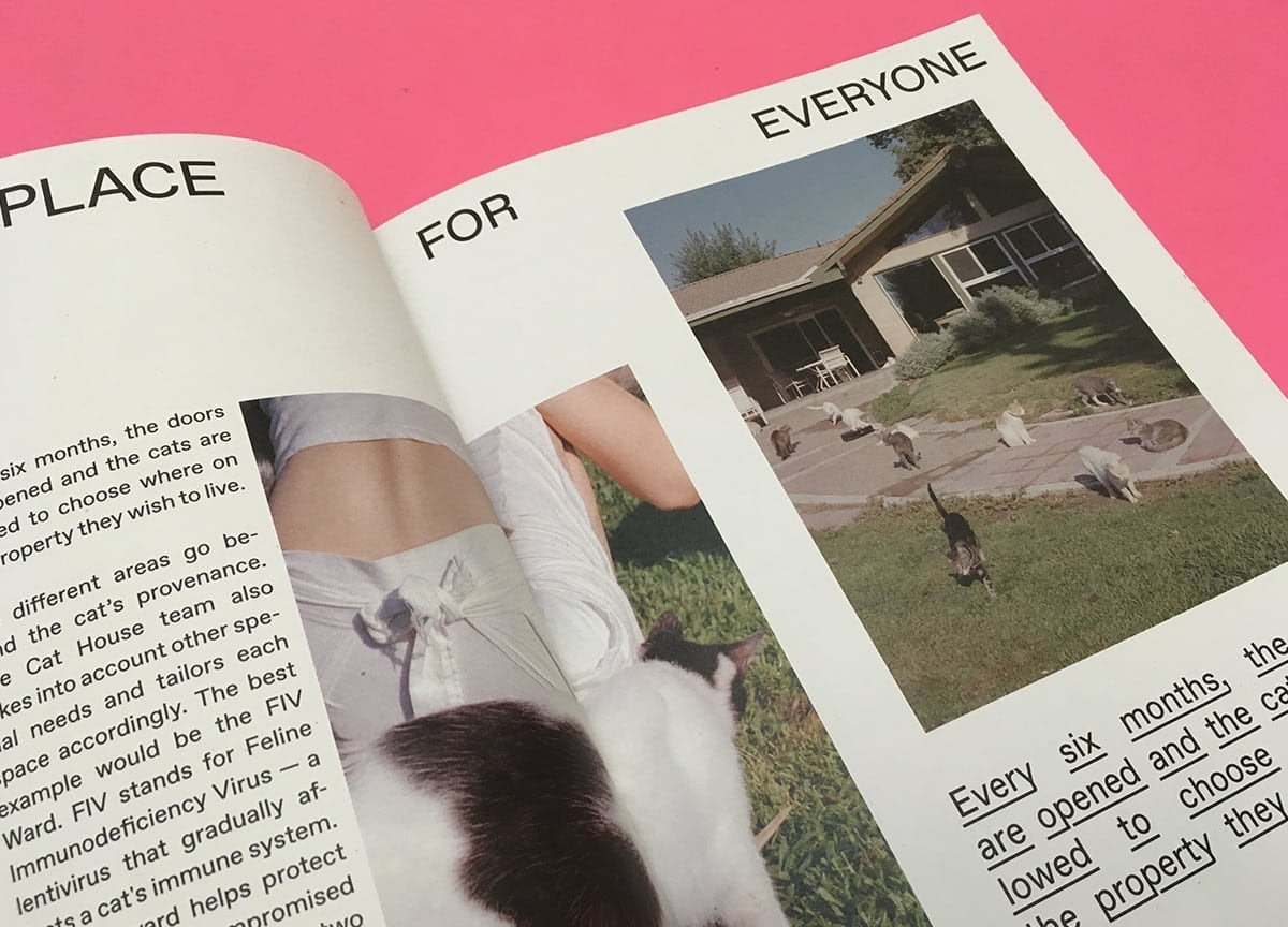 cats-agapornis-magazine-issue-5