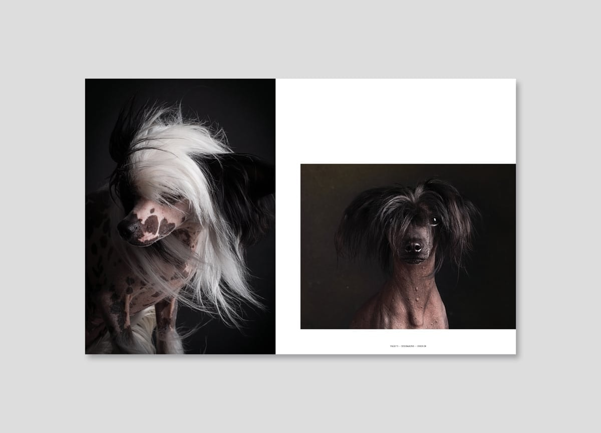 four-and-sons-magazine-bald-dogs